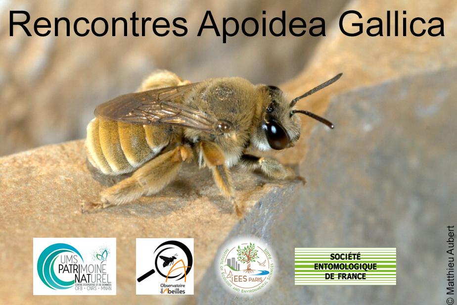 Apoidea Gallica 2020